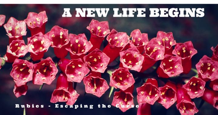 New Life Begins